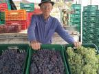 Feira Ecológica de Caxias do Sul terá degustação de uva orgânica Rosa Ana Bisinella/Divulgação