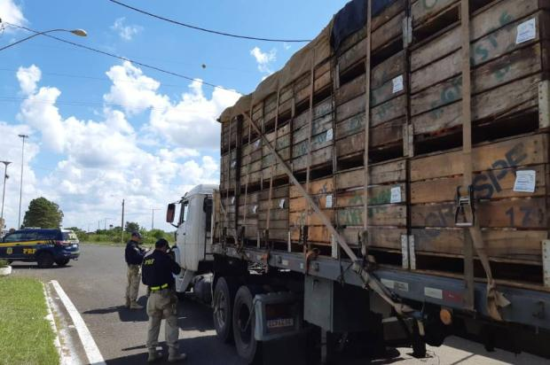 Cinco caminhões são autuados por excesso de peso durante fiscalização da PRF em Vacaria Divulgação / PRF/PRF