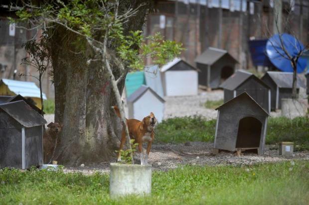 Secretaria do Meio Ambiente de Caxias estuda alternativas para a construção do Centro de Bem-Estar Animal Lucas Amorelli/Agencia RBS