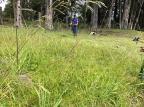 Sem resposta do Estado, prefeitura de Canela executa roçadas em trechos da RS-235 Rita Souza / Prefeitura de Canela/Prefeitura de Canela