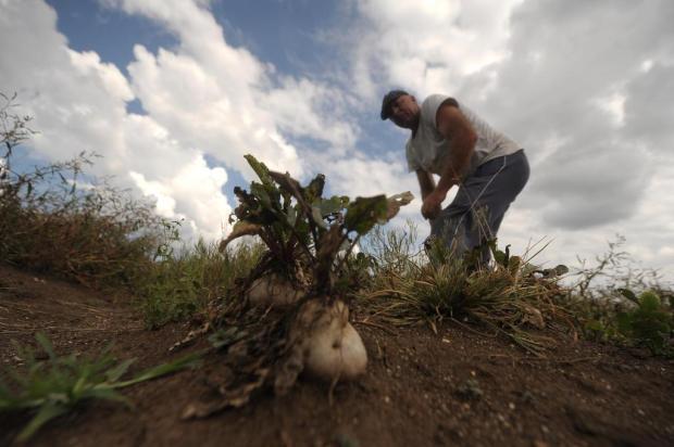 Produtores rurais da Serra Gaúcha enfrentam seca e coronavírus Lucas Amorelli/Agencia RBS