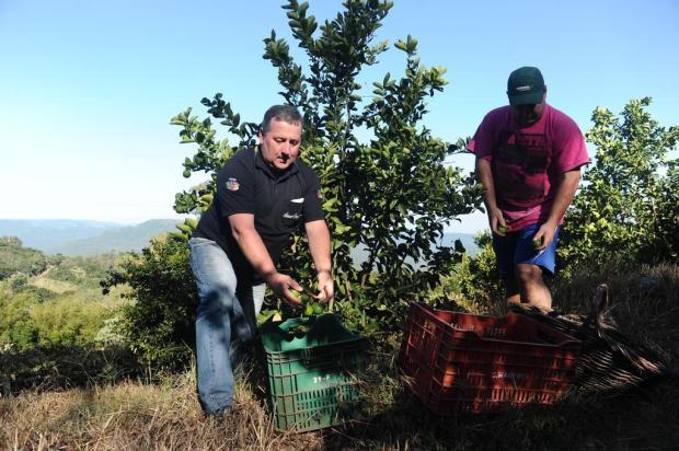 Em época de pandemia de coronavírus, produtores rurais de Caxias seguem na lida Antonio Valiente/Agencia RBS