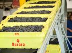 Aurora colheu 61,9 milhões de quilos de uva em 2020 Wagner Meneguzzi / Divulgação/Divulgação