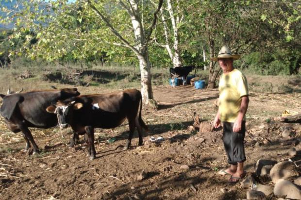 Agricultores de Caxias pedem que prefeitura decrete estado de emergência por conta da estiagem Marlise Rauber/Divulgação