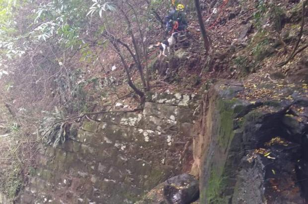 Ilhados no Arroio Pinhal, cachorros são resgatados pelos bombeiros em Caxias do Sul Divulgação / Corpo de Bombeiros Militar de Caxias do Sul/Corpo de Bombeiros Militar de Caxias do Sul