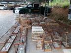 Polícia Civil apreende armas, animais abatidos e pássaros em extinção em Garibaldi Divulgação/Polícia Civil de Garibaldi