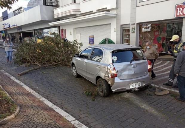 Motorista perde controle do veículo e derruba árvore no centro de Caxias do Sul Soli Lemos/Agência RBS
