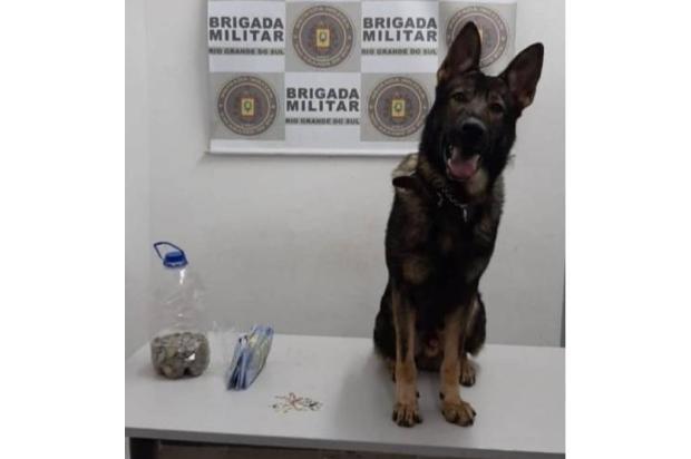 Cão policial encontra 42 pedras de crack em fundo falso de parede em Caxias do Sul Brigada Militar / Divulgação/Divulgação