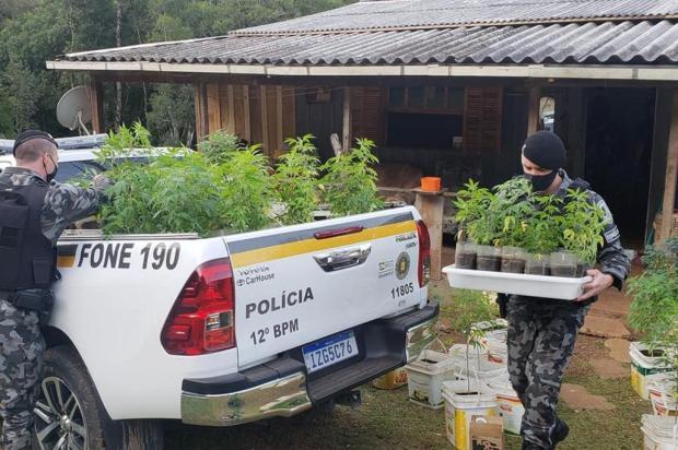 Apreensões de drogas crescem 387% por polícias de Caxias do Sul em 2020 Jackson Cardoso/Divulgação