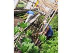 Captação da chuva deverá poupar R$ 4 mil em água no Presídio de São Francisco de Paula Susepe / Divulgação/Divulgação