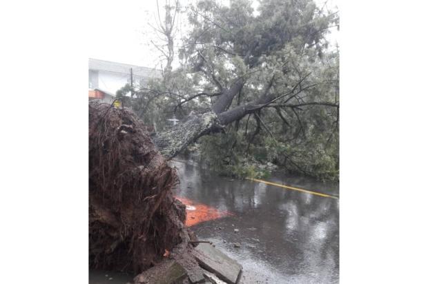 Temporal derruba árvore e provoca deslizamento de terra em Garibaldi Divulgação / Jessica Carniel/Jessica Carniel