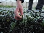 Temperatura negativa e geada cobrem plantações em Nova Petrópolis Antonio Valiente/Agência RBS