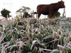 Cidades da Serra amanhecem com geada e temperaturas negativas nesta quinta-feira Daniela Affonso/Agência RBS