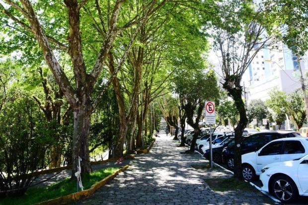 Prefeitura de Caxias do Sul lança Plano Diretor de Arborização Urbana Fabiana de Lucena / Divulgação/Divulgação