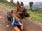 Zeus: o primeiro pet que percorreu os Caminhos de Caravaggio Adriana dos Reis/Divulgação