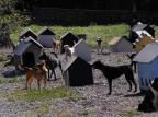 Caxias desiste de implantar Centro de Bem-Estar Animal em 2020 Marcelo Casagrande/Agencia RBS