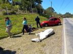 Cavalo cavalgado por criança é atropelado por carro no interior de Flores da Cunha, neste sábado BM Flores da Cunha/Divulgação